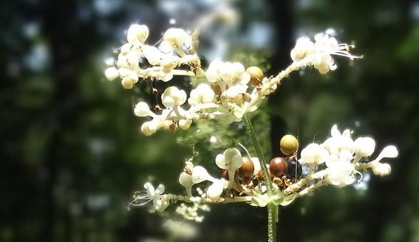 Photos: 素敵な花