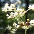 写真: 素敵な花