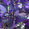 紫色の彩り