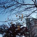 Photos: 初冬