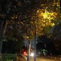 写真: 夜のバス通り