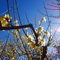 写真: 春の陽射し