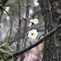 写真: 春はまだかなぁ~