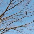 写真: 春をめざして