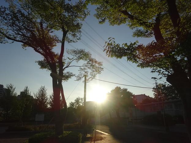 優しい朝日