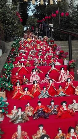 77段飾り@座間神社