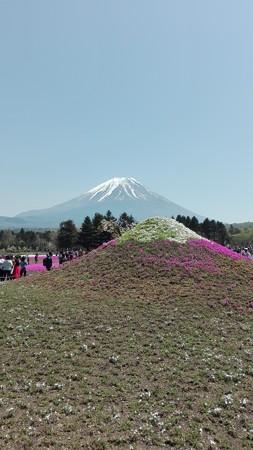 ミニ富士と本物@富士芝桜まつり