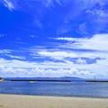 写真: 鴨居の海岸と泳ぐ犬。
