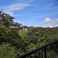 写真: 山林と住宅街@逗子の裏手