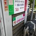 ラッテ入口の牛の尻