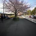 Photos: 座間コストコ前 桜