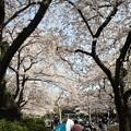 Photos: 鹿沼公園 桜祭り