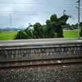 ただのつる草だけどモニュメント思った@高浜駅