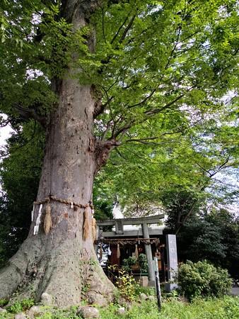 神木と八坂神社