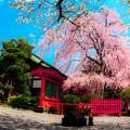 写真: 神社の傍らで