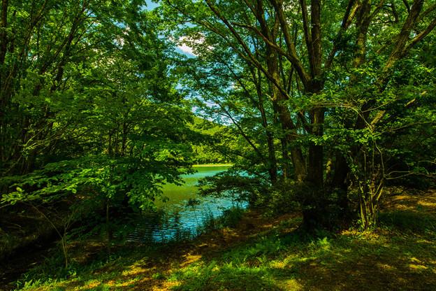木漏れ日の溜まる湖