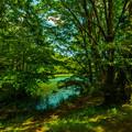 写真: 木漏れ日の溜まる湖