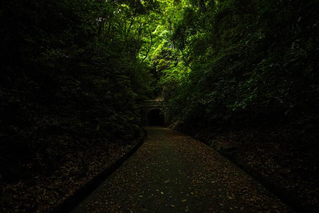 写真: 明治トンネルへの招き道
