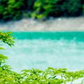 写真: ダム湖で避暑