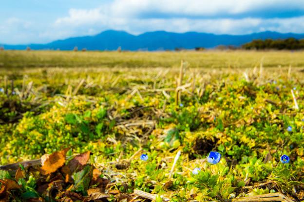 春を香らせる自然