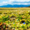 写真: 春を香らせる自然