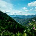 写真: 拝啓、山の上より。秋桜を添えて。
