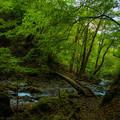写真: ジオラマのような橋