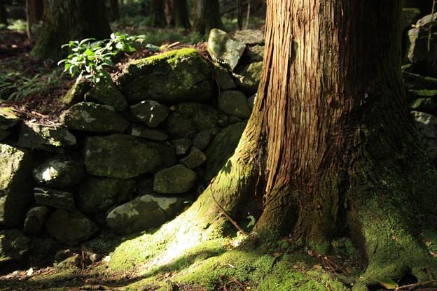 石垣と苔むす幹