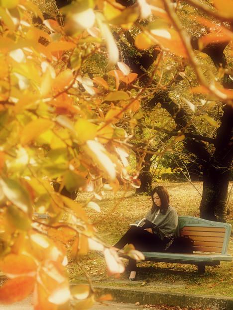 秋のone scene