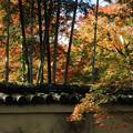 Photos: 秋の宴