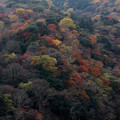 Photos: 美しき天然