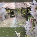 Photos: 春が満開