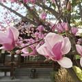 Photos: 春感