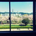 Photos: 春景色