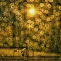 Photos: 雨