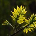 輝く緑は希望を与えてくれます