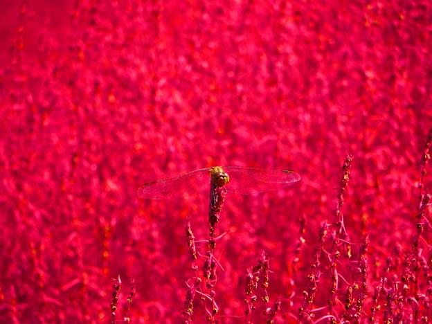 Photos: 赤い色の背景