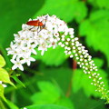 Photos: 初夏に出会った虫たち6