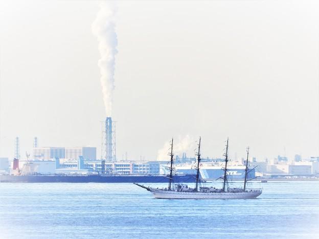 東京湾 帆船
