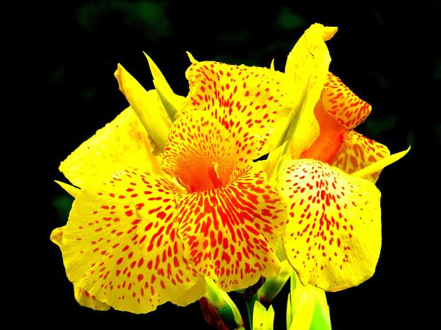 沖縄で見た花