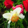 写真: 少し前に観た花