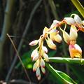 Photos: 沖縄で見た花3