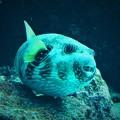 写真: 美ら海水族館 4