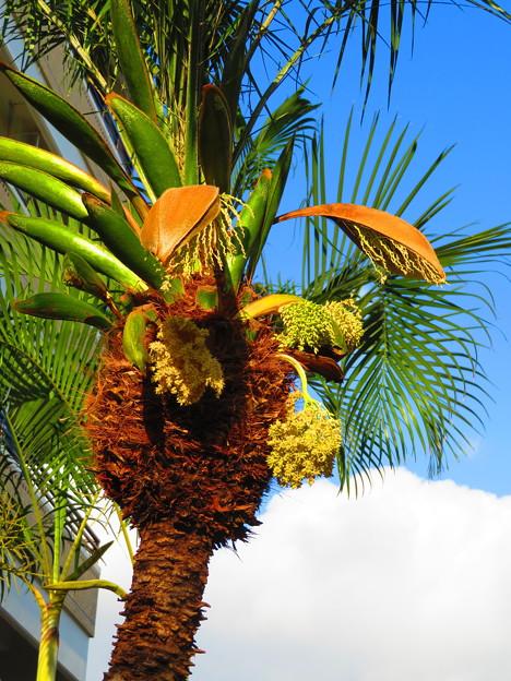 写真: 沖縄で見た花2