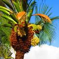 Photos: 沖縄で見た花2