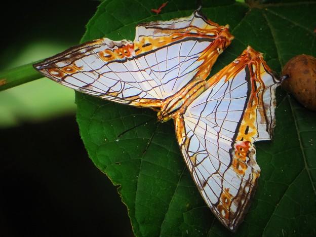 南海の島の蝶
