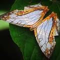 写真: 南海の島の蝶
