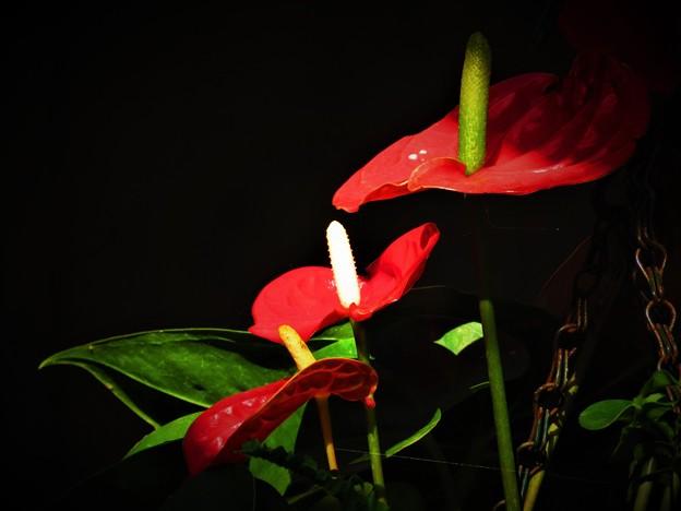 南海の島の赤い花3