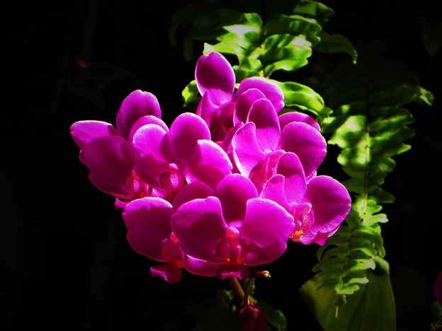 蘭の花は不思議1