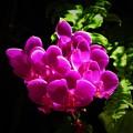 写真: 蘭の花は不思議1
